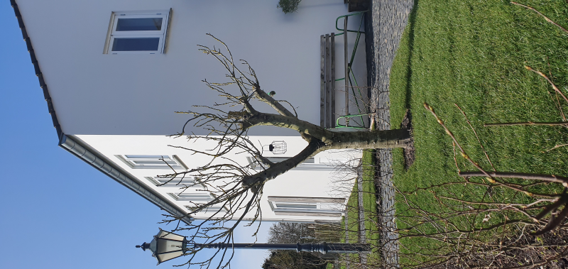 Klantervaring van De bonte beleving uit Oostkapelle